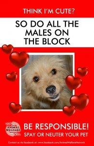 AWN-Dog-Spay-Poster